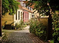 The streets of Dragør (Kirsten M Lentoft) Tags: street city flowers houses homes tree denmark dragør alley hollyhocks amager alcea abigfave betterthangood goldstaraward kirstenmlentoft