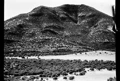 TO THE MOUNTAIN (La Branaro) Tags: winter blackandwhite bw mountain mountains film forest 1 texas olympus 35mmfilm om ilford om1 fortdavis redfilter davismountains johnburroughs scenicoverlook fakeinfrared damagedfilm fauxinfrared sfx200 red25filter ilfordsfx200 ilfordfilm damagedphotograph davismountainsscenicloop damagedframe arcticblast2011 tiffenred25filter davismountainslookout