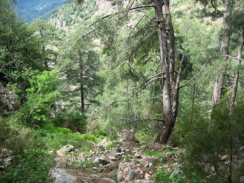 Dans le ravin de Calanconi: après le col 1160 m