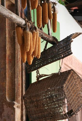 Dried Corns