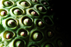 pop (futuna) Tags: plant green fruit breasts lotus alien seeds tiny tetek futuna