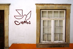 Peace (the bbp) Tags: portugal window ventana searchthebest finestra coimbra peacedove thebbp passionphotography mywinners colombadellapace