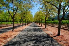 Napa Vineyard Driveway