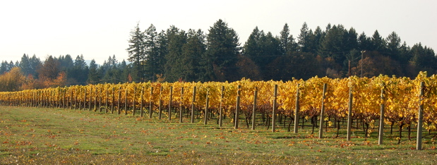 spruce_goose_vineyard1