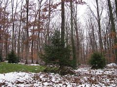 Having a Meltdown (glenda.suebee) Tags: trees snow nature woods glenda greengrass flickrelite