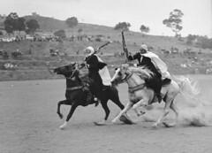 071202_143240 (Jacques Godeau) Tags: bw algeria nb fantasia algérie cavaliers