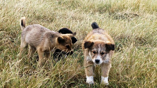 "highland puppies • <a style=""font-size:0.8em;"" href=""http://www.flickr.com/photos/28749633@N00/2208626242/"" target=""_blank"">View on Flickr</a>"
