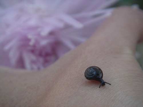 SMALL BLACK SNAIL