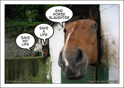 End Horse Slaughter