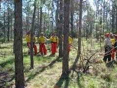 DSC00706 (nathan32935) Tags: florida chainsaw firefighting firefighters firetraining stihl wildland brevardcounty wildlandfirefighting bcfr