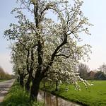 Beemster: Volgerweg landscape spring