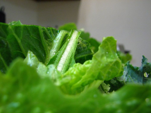 lettuce closeup