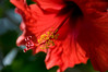 Is the Pen mightier than the Sword? (nosha) Tags: flower nature beauty gardens garden newjersey nikon erotic nj duke criminal hibiscus crime horticulture dukegardens somersetcounty d300 18200mm dorisduke nosha savedukegardens