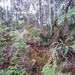 RotoruaWai-O-Tapu059 thumbnail