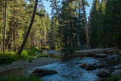 IMG_6813-Edit (dangerismycat) Tags: california yosemite yosemitenationalpark tuolumnemeadows tuolumneriver danafork