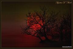 Rosso di sera tra gli alberi - Febbraio-2017 (agostinodascoli) Tags: art digitalart digitalpainting agostinodascoli nature texture sole tramonto sunset paesaggi cianciana sicilia nikon nikkor alberi photoshop photopainting creative colore fullcolor rosso sera