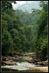 taman negara river (Lexe-I) Tags: tree nature river rainforest rocks asia southeastasia south east jungle malaysia tropical peninsula terengganu tamannegara unspoilt jungleriver tasikkenyir