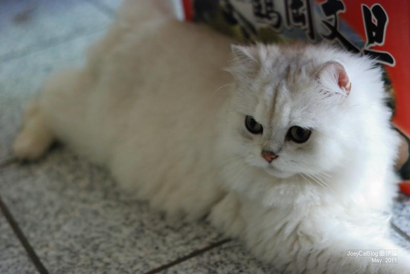 CAT_米米__DSC_1138