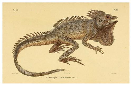 011-Erpétologie générale ou Histoire naturelle complète des reptiles 1834