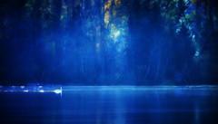 The Swan (Krogen) Tags: norway river norge swan norwegen noruega nes scandinavia akershus romerike krogen elv noorwegen skandinavia naturesfinest glomma blueribbonwinner svane olympuse400 goldenphotographer