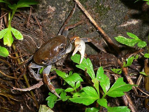 MCU-Crab-20071009-3