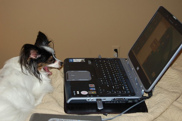 dog using a computer laptop