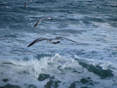 Skimming the Ocean