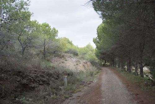 Camino antes