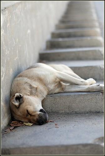 Sleeping dogs lie. Downwards.