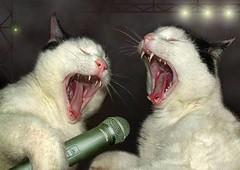 SinginCats