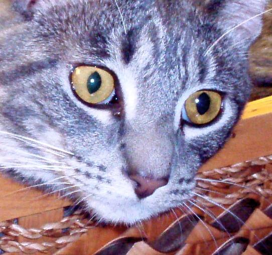 Silvio's eyes