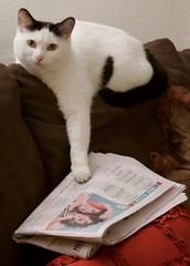 hands off of my newspaper!