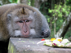 Sacred Monkey Forest / Indonesia, Ubud (flydime) Tags: street city trip travel vacation portrait bali color nature face animal canon indonesia monkey ubud macaque monkeyforest mandalawisatawanarawana puradalemagung macaca 5photosaday canong7 travelon5photosaday