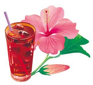 karkade hibiscus bebida egipcia