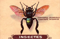 insecte 7