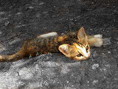 Kedi (Gökhan Karakaya) Tags: cat think imagine kedi metu odtü bestofcats