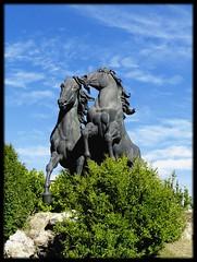 Caballos cartujanos (Canoso.) Tags: blue horse verde green azul caballo cheval blu vert bleu greatshot grn blau blume cavallo cavalo pferd fiatlux galope canoso paisajesdepueblosycampos