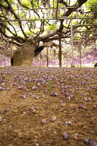 Ashikaga Flower Park 05