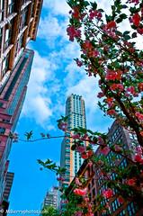 YELLOW SKYSCRAPER (Mberryphotos) Tags: d7000 hdrimage lightroom manhatten mberryphotoscom mikeberry newyorkcity nikon nyc raw skyscraper spring