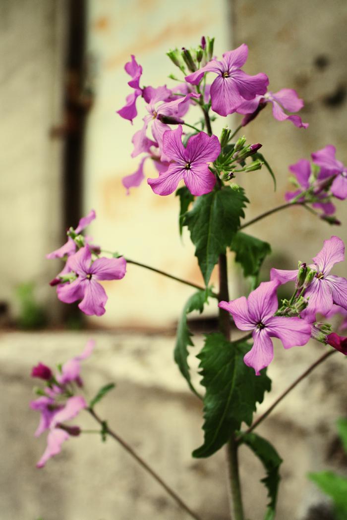 *Spring Flowers*
