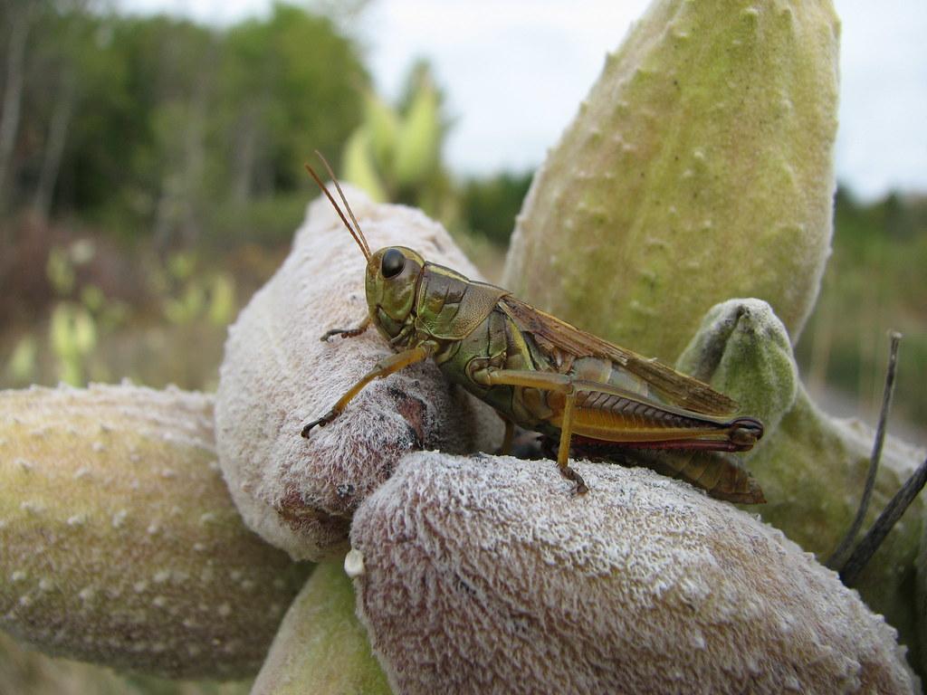 Hopper up close