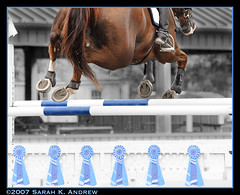 For a Bit of Ribbon... (Rock and Racehorses) Tags: blue horse color fence jump nj grandprix chestnut shows ribbon siempre jumpers horseshoes blueribbon selective selectivecolor selectivecolorization awesomeshot blueribbonwinner instantfave mywinners mywinner anawesomeshot diamondclassphotographer flickrdiamond hugohuesca