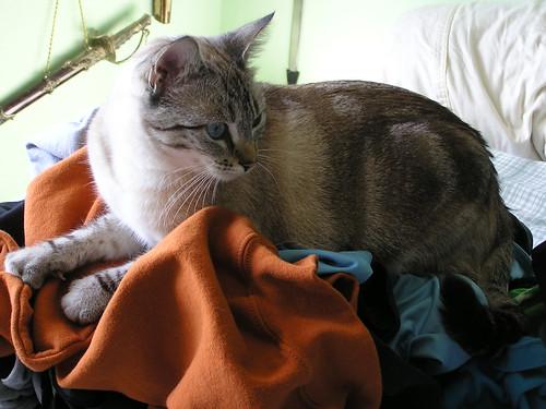 Suz on Laundry 1