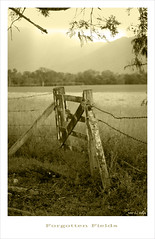 Forgotten Fields (fotofantasea) Tags: wood tree field fence landscape gate photographer timber australia wallart photograph barbedwire queensland blueribbonwinner mywinners superbmasterpiece auselite bestofaustralia hollykempe