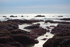 Agate Beach Low Tide (lisascenic) Tags: nature pacificocean marincounty lisascenic thesea tidepool agatebeach tidepooling lisalazar