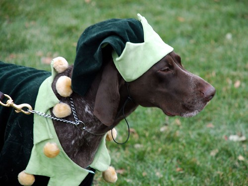 Reindog 5: Green Elf
