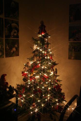 My Tree 2007