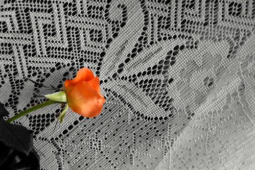 a rose-20v3