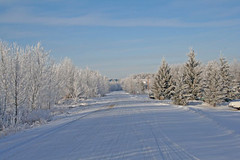 our road b (withrow) Tags: road winter canada hoarfrost alberta