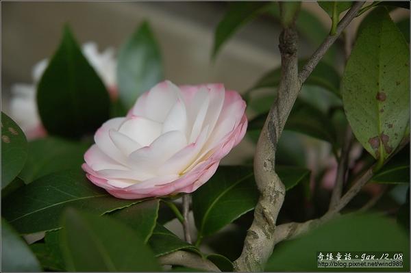 DSC_7234Sawada's Dream夢(八美園)